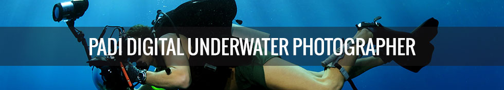 padiunderwaterphotography